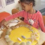 Nature Design - Seashells