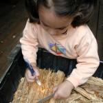 Nature Study - Rotting Wood